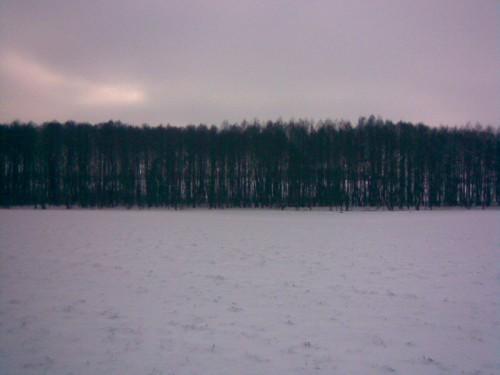 Den 25. Januar 2014. Die Erlen am Bolbritzer Fließ werden für den Naturschutz gesichert. Hier soll wieder Wildnis gewagt werden.